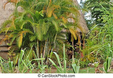 Thatch hut in the tropics