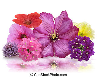 Fresh Flowers - Colorful Fresh Flowers ,Close Up For...