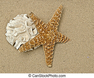coral and starfish on sandy beach