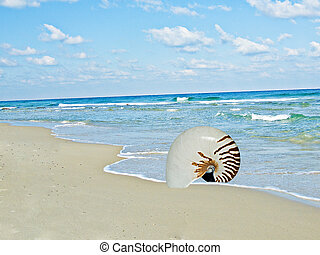 nautilus shell on sea beach