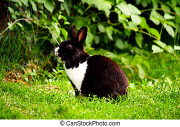 Cute rabbit in the grass