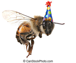 Honey bee on White Background With Birthday Hat