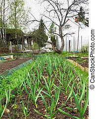 spring kitchen garden - The image of spring kitchen garden