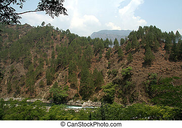 Trees on Hill Slope