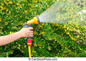 Watering the garden with a hose with a spray