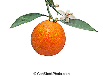 orange with flower isloated on white background