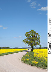Road in the canola field.