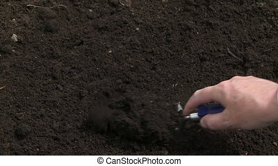 Planting tree seedling - Planting a tree seedling in the...