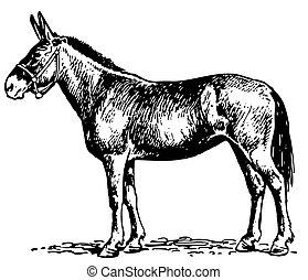 Mule standing