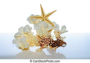 Marine coral and shells