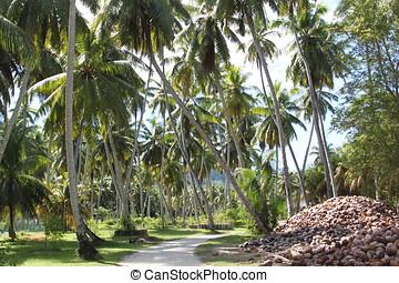 Landscape Seychelles - Tropical landscape Seychelles, Indian...
