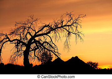 Sunset - A desert sunset with a mesquite tree and a bird...