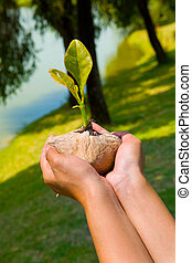 Let's grow them - A concept of preserving our environment by...
