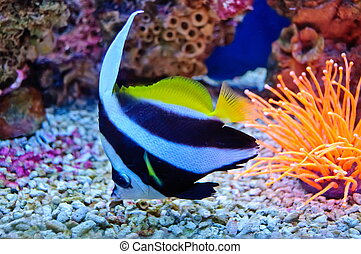 Marine tropical fish. Colorful exotic little fish