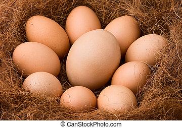 huevo, serie, :, ser, más grande, otro, -, Zumbido
