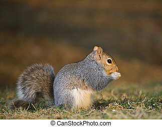 Reverent squirrel - Tree squirrel that appears to be praying...
