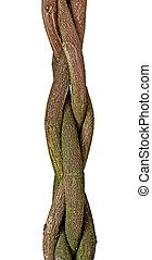 árvore, trançado, tronco