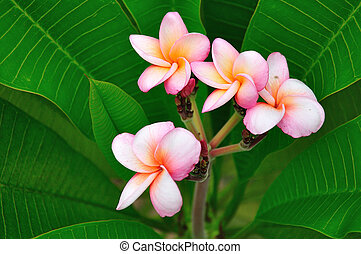 Tropical flowers on green leafs
