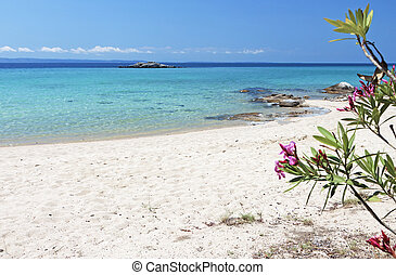 Scenic beach in Greece - Scenic beach of Kalogria at...