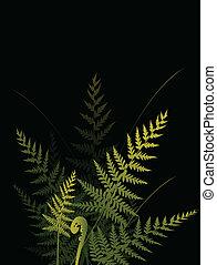 fern background 2