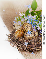 spring still life - on a sacking nest, quail eggs and...