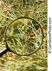 Neddle in the haystack - Finding the needle with magnifying...