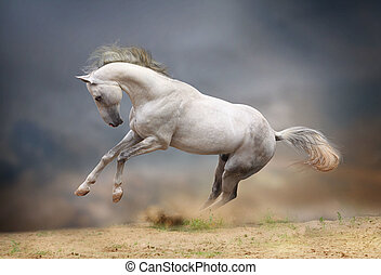 silver-white stallion in storm