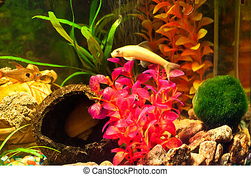 Aquarium with plants and fish