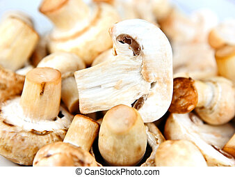 An edible mushroom, especially the much cultivated species Agaricus bisporus.