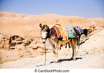 donkey on a leash in Judea desert