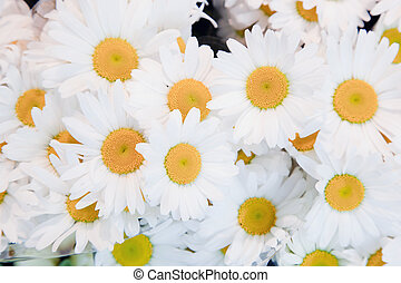 Soft spring flowers background