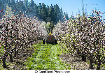 Farmer spraying pesticide on apple trees from a tractor