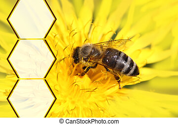 Honeybee on yellow flower