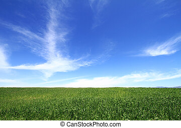 Wheat field with cloudscape