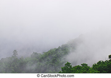 Moisture of tropical in bamboo forest in rainy season