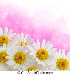 Daisies on pink background