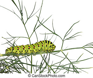 Caterpillar on grass isolated on white background