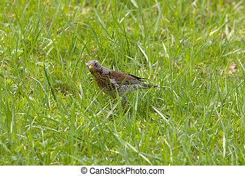 in spring grass