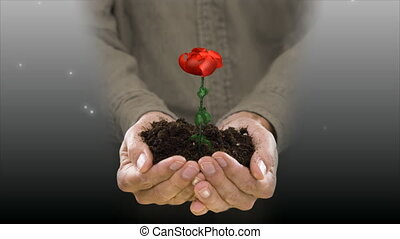 holding & growing rose flower