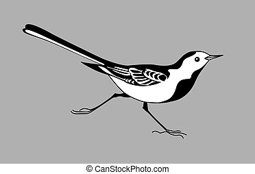 wagtail silhouette on gray  background