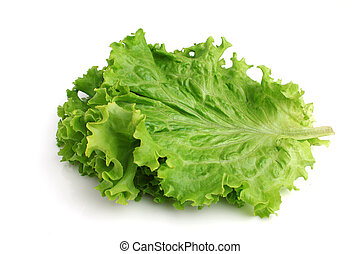 Lettuce on a white background