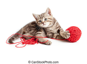 tabby kitten playing red clew