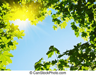 maple leaves against the dark blue sky and the sun