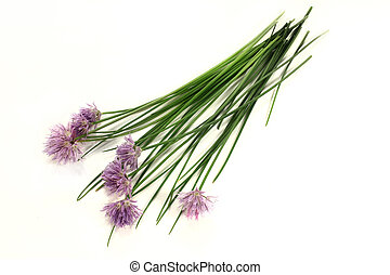 chives - a bunch of chives with blossoms on a light...