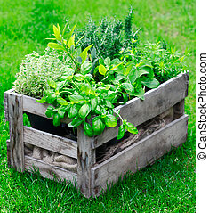 Rustic crate with fresh herbs - Rustic wooden crate on a...