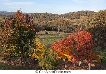Autumn colours in Australia. - Autumn colours in countryside...