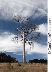 A rural landscape with dead tree. Near Oberon. New South Wales. Australia.