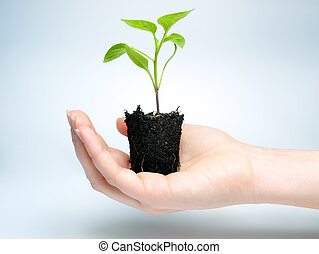 Future crop - Woman is holding young plant that grows in a...