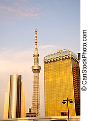 Tokyo skytree at evening - Tokyo skytree with yellowish...