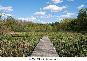 Walkway - A raised wooden walkway over marsh area.